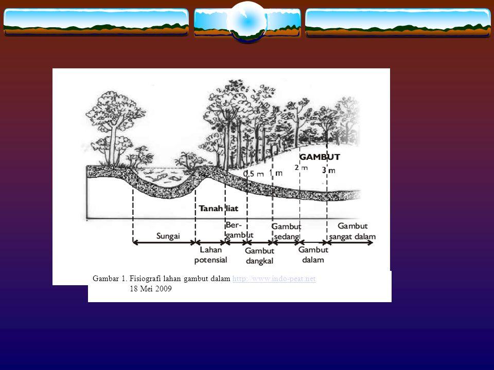 Gambar 1. Fisiografi lahan gambut dalam http://www.indo-peat.nethttp://www.indo-peat.net 18 Mei 2009