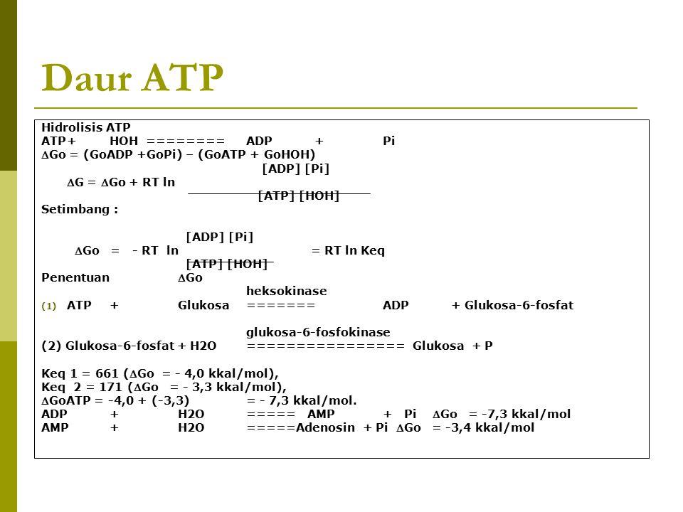 Daur ATP Hidrolisis ATP ATP+HOH ========ADP+Pi Go = (GoADP +GoPi) – (GoATP + GoHOH) [ADP] [Pi] G = Go + RT ln [ATP] [HOH] Setimbang : [ADP] [Pi] G