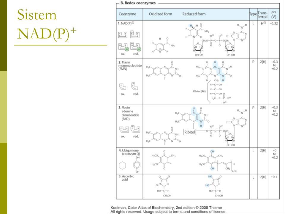Sistem NAD(P) +