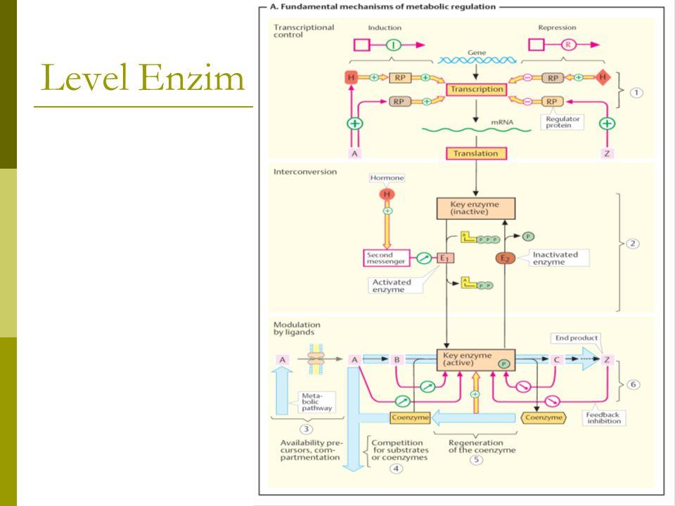 Level Enzim