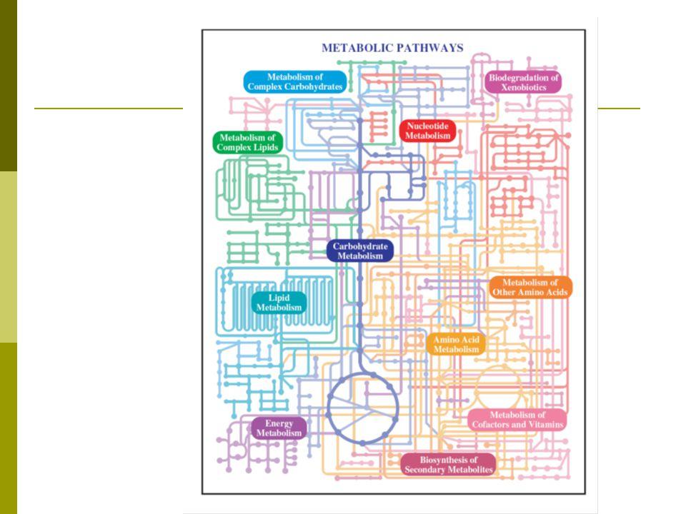 Jalur utama metabolisme energi  Glikolisis, oksidasi asam lemak  Siklus asam sitrat  Transport elektron dan fosforilasi oksidatif  Glukoneogenesis  Fotosintesis