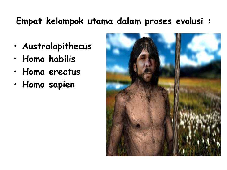 Empat kelompok utama dalam proses evolusi : Australopithecus Homo habilis Homo erectus Homo sapien