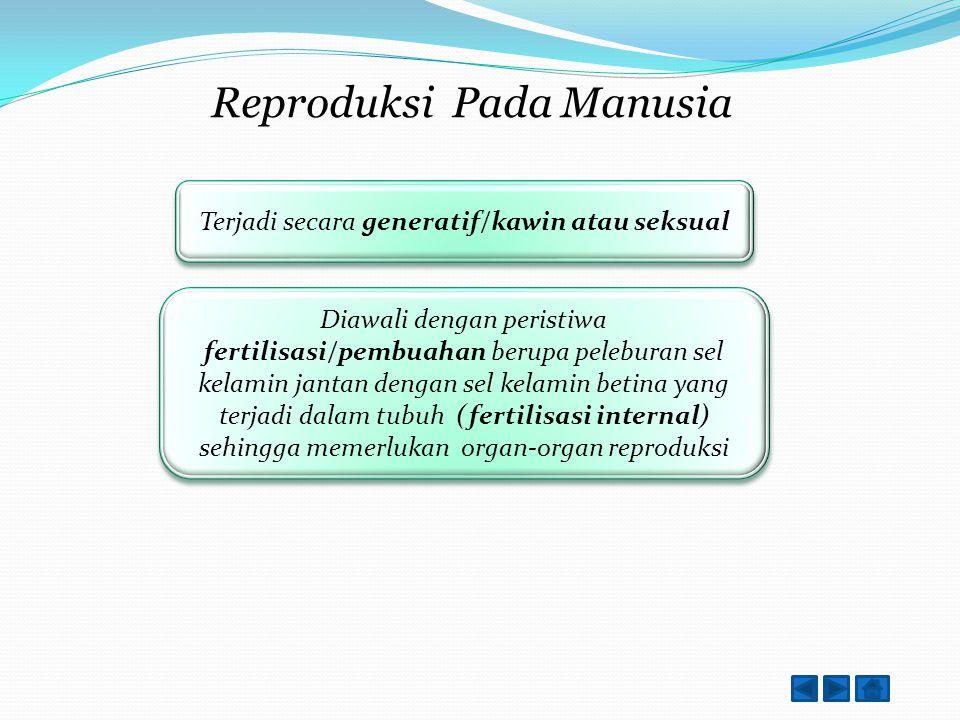 Reproduksi Pada Manusia Generatif atau Vegetatif?? Terjadi secara generatif/kawin atau seksual Terjadi secara generatif/kawin atau seksual Prosesnya??