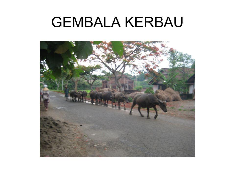 GEMBALA KERBAU