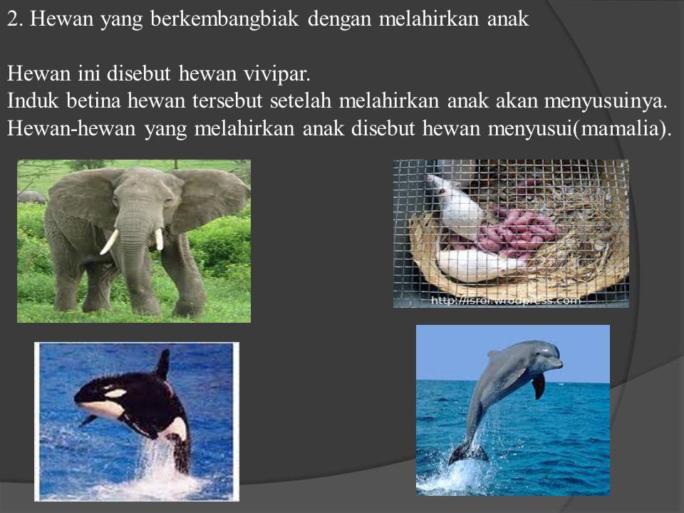 2.Hewan yang berkembangbiak dengan melahirkan anak Hewan ini disebut hewan vivipar.