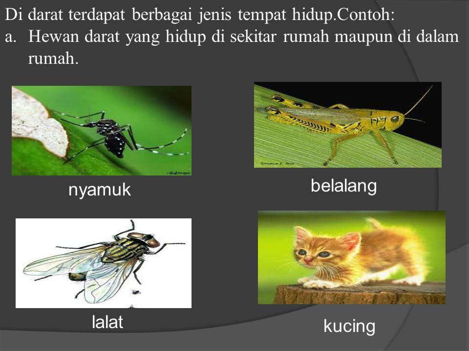 Di darat terdapat berbagai jenis tempat hidup.Contoh: a.Hewan darat yang hidup di sekitar rumah maupun di dalam rumah.