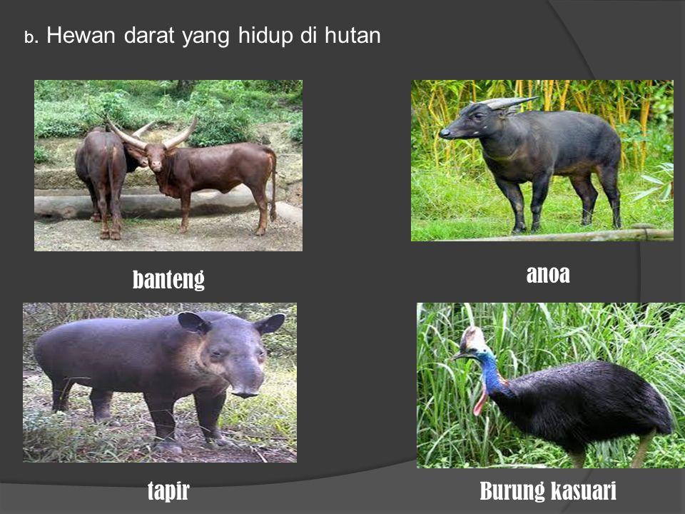 b. Hewan darat yang hidup di hutan banteng anoa tapirBurung kasuari