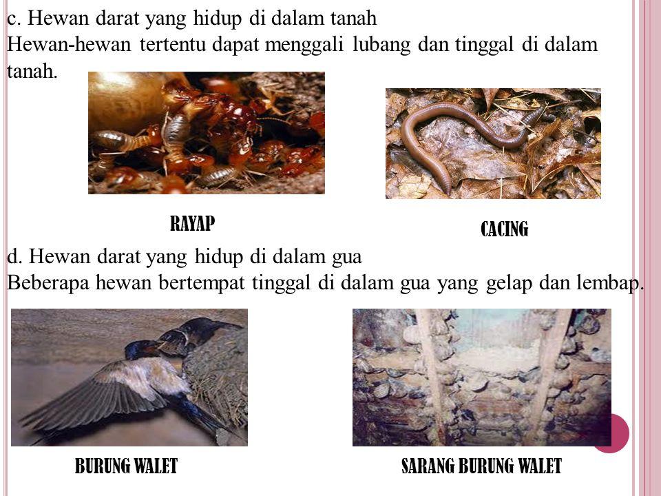 c. Hewan darat yang hidup di dalam tanah Hewan-hewan tertentu dapat menggali lubang dan tinggal di dalam tanah. d. Hewan darat yang hidup di dalam gua