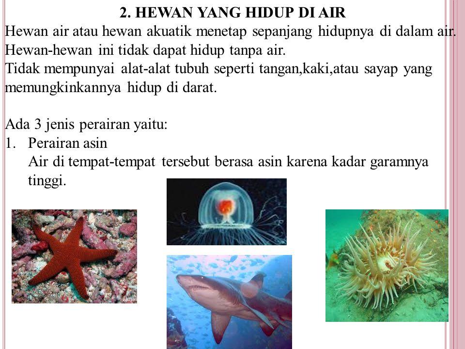 2.HEWAN YANG HIDUP DI AIR Hewan air atau hewan akuatik menetap sepanjang hidupnya di dalam air.