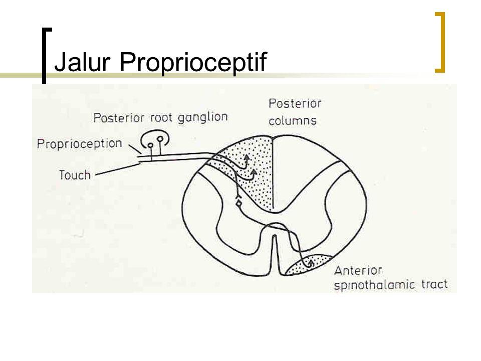 Jalur Proprioceptif