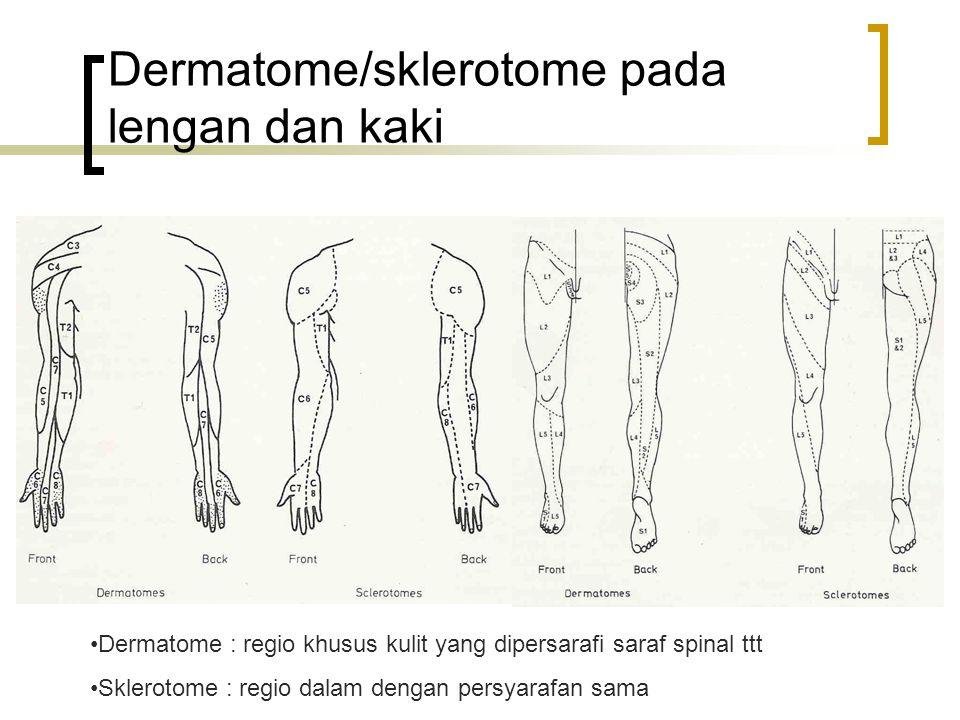Dermatome/sklerotome pada lengan dan kaki Dermatome : regio khusus kulit yang dipersarafi saraf spinal ttt Sklerotome : regio dalam dengan persyarafan