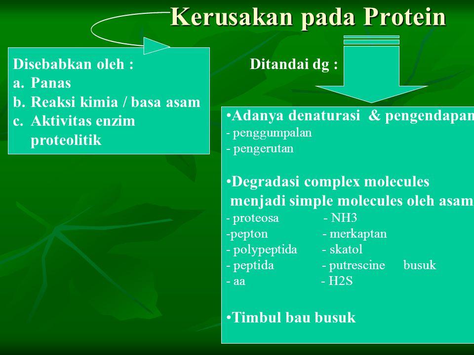 Kerusakan pada Protein Disebabkan oleh : a.Panas b.Reaksi kimia / basa asam c.Aktivitas enzim proteolitik Adanya denaturasi & pengendapan - penggumpal