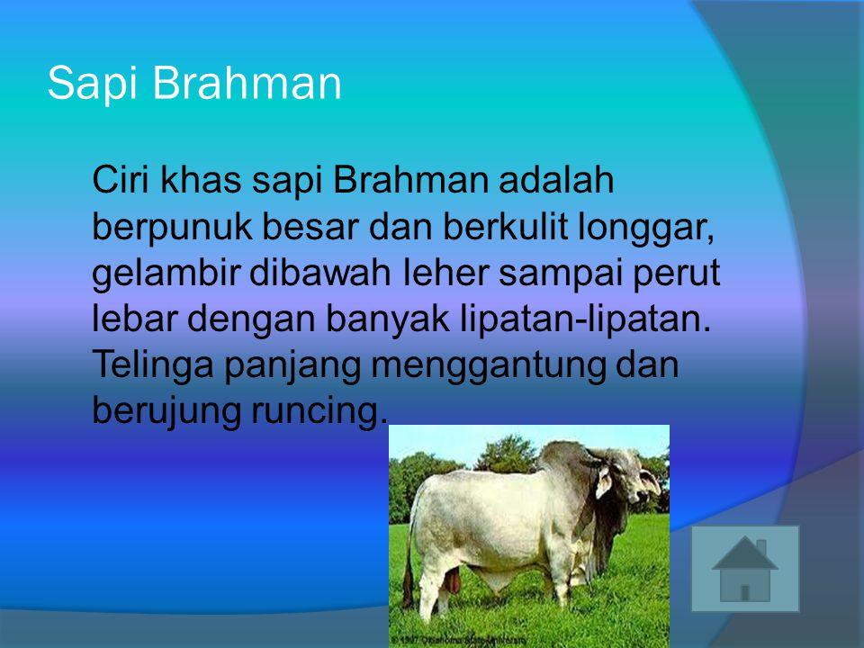 Sapi Simental Sapi ini merupakan tipe sapi perah dan pedaging.
