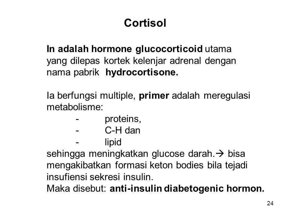 24 Cortisol In adalah hormone glucocorticoid utama yang dilepas kortek kelenjar adrenal dengan nama pabrik hydrocortisone. Ia berfungsi multiple, prim