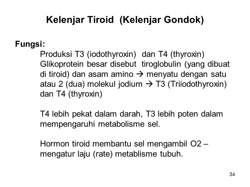 34 Kelenjar Tiroid (Kelenjar Gondok) Fungsi: Produksi T3 (iodothyroxin) dan T4 (thyroxin) Glikoprotein besar disebut tiroglobulin (yang dibuat di tiro