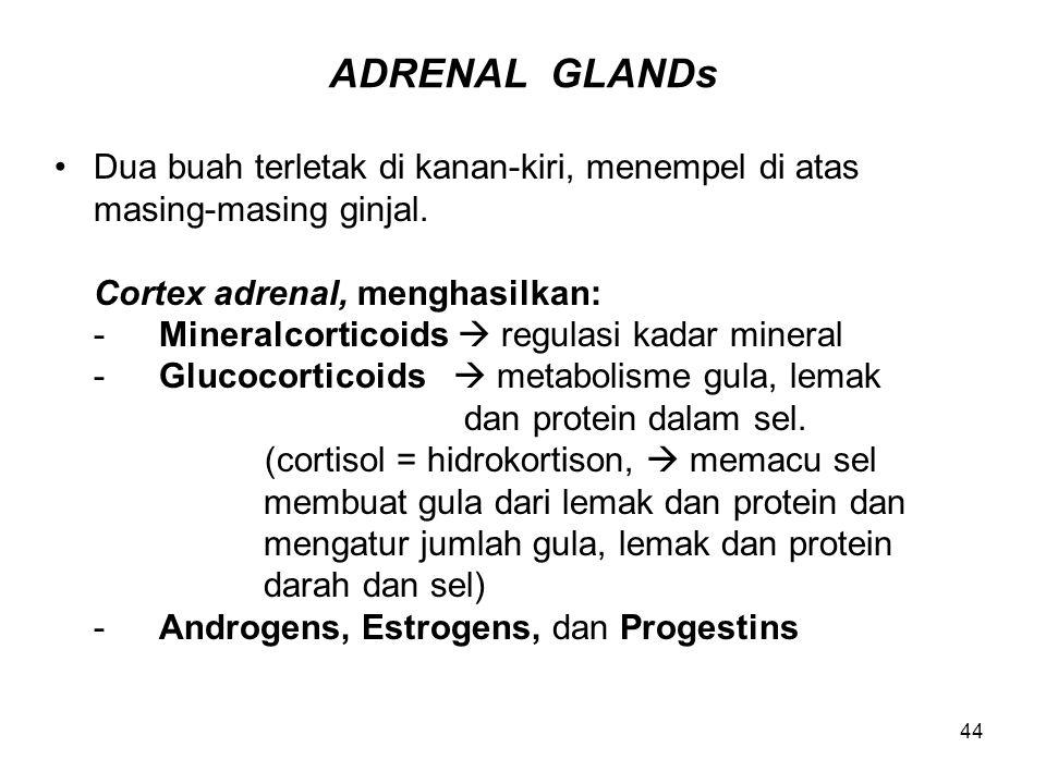 44 ADRENAL GLANDs Dua buah terletak di kanan-kiri, menempel di atas masing-masing ginjal. Cortex adrenal, menghasilkan: -Mineralcorticoids  regulasi