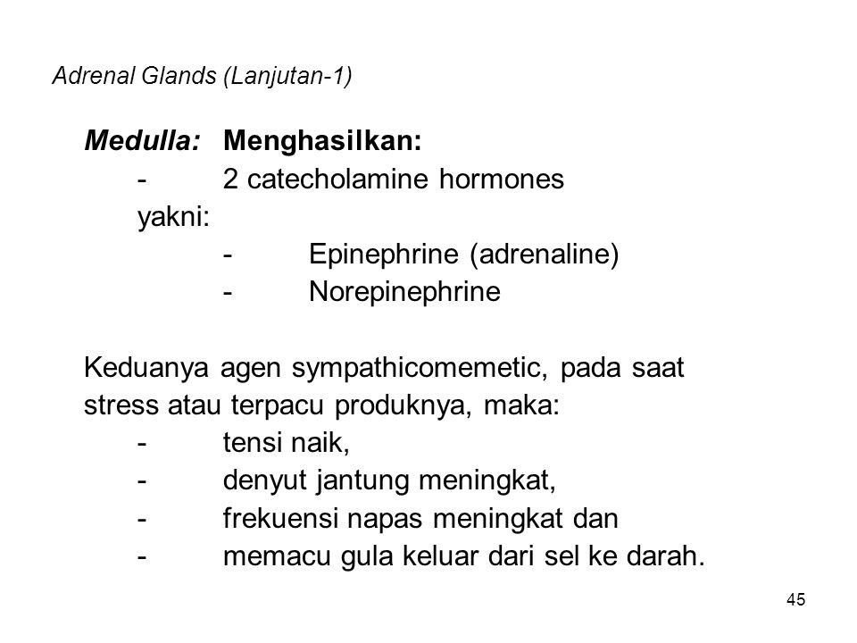 45 Adrenal Glands (Lanjutan-1) Medulla: Menghasilkan: -2 catecholamine hormones yakni: -Epinephrine (adrenaline) -Norepinephrine Keduanya agen sympath
