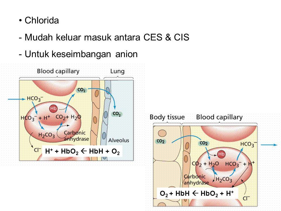Chlorida - Mudah keluar masuk antara CES & CIS - Untuk keseimbangan anion O 2 + HbH  HbO 2 + H + H + + HbO 2  HbH + O 2