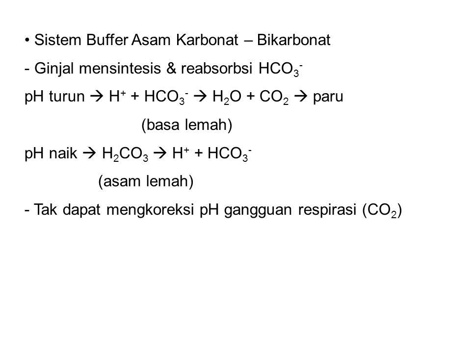 Sistem Buffer Asam Karbonat – Bikarbonat - Ginjal mensintesis & reabsorbsi HCO 3 - pH turun  H + + HCO 3 -  H 2 O + CO 2  paru (basa lemah) pH naik  H 2 CO 3  H + + HCO 3 - (asam lemah) - Tak dapat mengkoreksi pH gangguan respirasi (CO 2 )