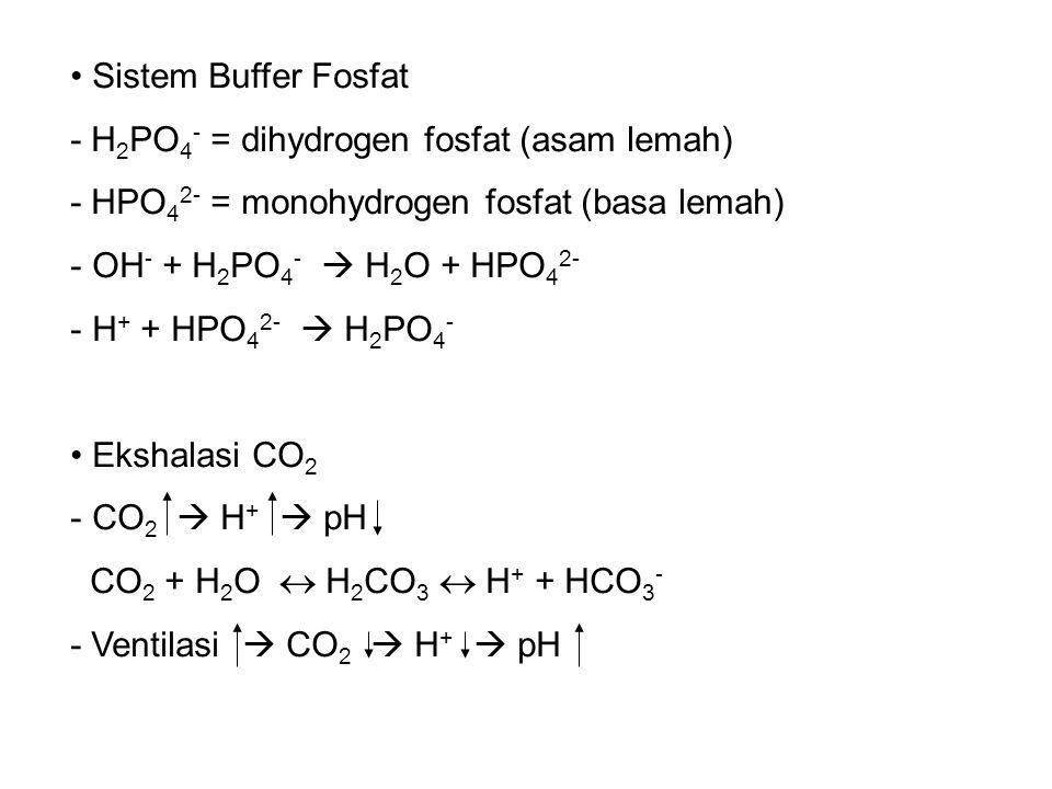 Sistem Buffer Fosfat - H 2 PO 4 - = dihydrogen fosfat (asam lemah) - HPO 4 2- = monohydrogen fosfat (basa lemah) - OH - + H 2 PO 4 -  H 2 O + HPO 4 2- - H + + HPO 4 2-  H 2 PO 4 - Ekshalasi CO 2 - CO 2  H +  pH CO 2 + H 2 O  H 2 CO 3  H + + HCO 3 - - Ventilasi  CO 2  H +  pH