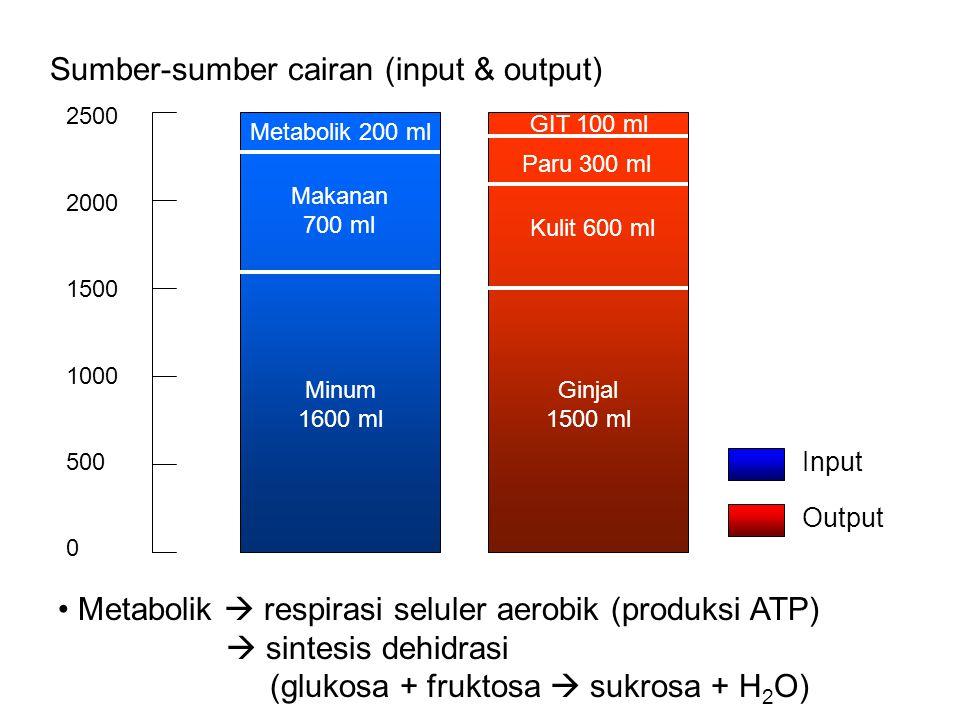 Sumber-sumber cairan (input & output) 2500 2000 1500 1000 500 0 Minum 1600 ml Ginjal 1500 ml Metabolik 200 ml Makanan 700 ml Kulit 600 ml Paru 300 ml GIT 100 ml Metabolik  respirasi seluler aerobik (produksi ATP)  sintesis dehidrasi (glukosa + fruktosa  sukrosa + H 2 O) Input Output