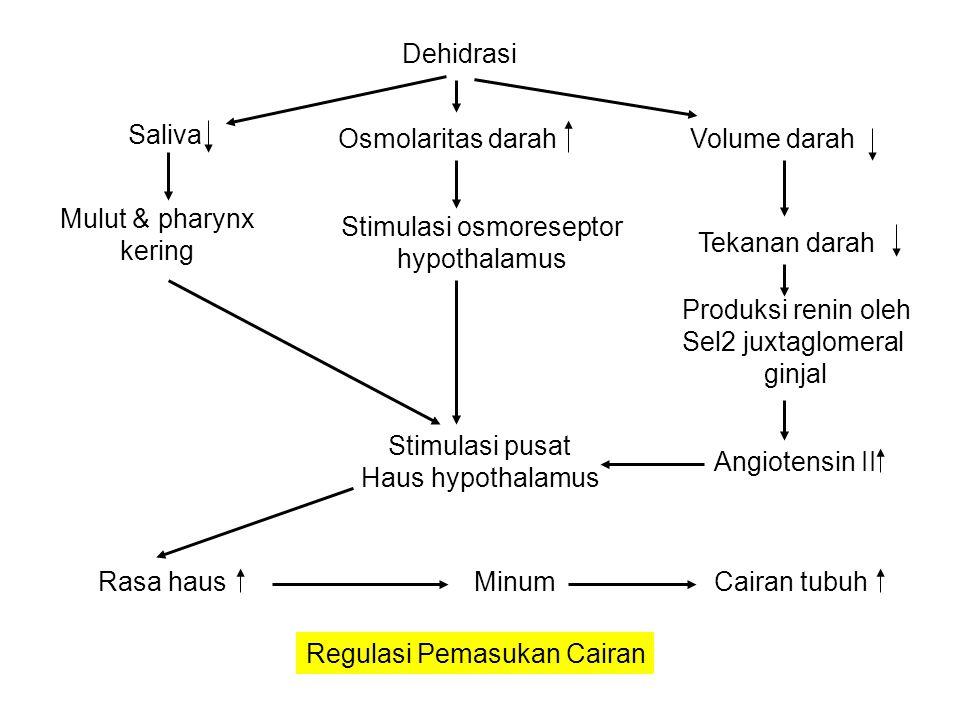 Asupan NaClKonsentrasi plasma Na + & Cl - Osmosis air dari CIS  Interstisial  plasma Volume darah Regangan atrium jantung Produksi renin Atrial Natriuretic Peptide (ANP) Angiotensin II GFRAldosterone Reabsorbsi NaCl oleh ginjalNa + & Cl - via urine (Natriuresis) Kehilangan air di urine via osmosisVolume darah Regulasi Hormonal Na + & Cl - Renal