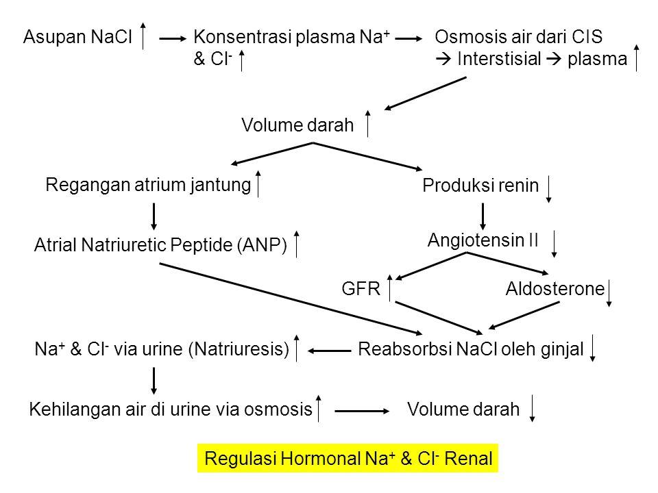 Osmolaritas cairan tubuh  ADH  protein aquoporin 2  membran apical sel  permeabilitas terhadap air  osmosis ke darah Volume darah Dehidrasi Hiperventilasi Vomitus ADH Diare Demam Keringat banyak Combustio (luka bakar)