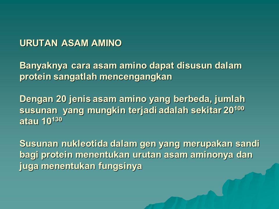 URUTAN ASAM AMINO Banyaknya cara asam amino dapat disusun dalam protein sangatlah mencengangkan Dengan 20 jenis asam amino yang berbeda, jumlah susuna