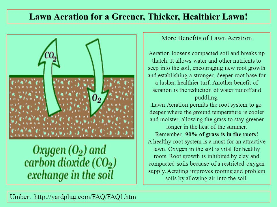 'Goose' Your Lawn for Good Soil Health By Shayne Hale June 2, 2011 Aeration is essential and fairly simple to do. Most rental centers have a lawn aera