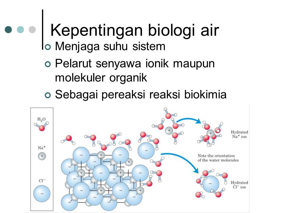 Kepentingan biologi air Menjaga suhu sistem Pelarut senyawa ionik maupun molekuler organik Sebagai pereaksi reaksi biokimia