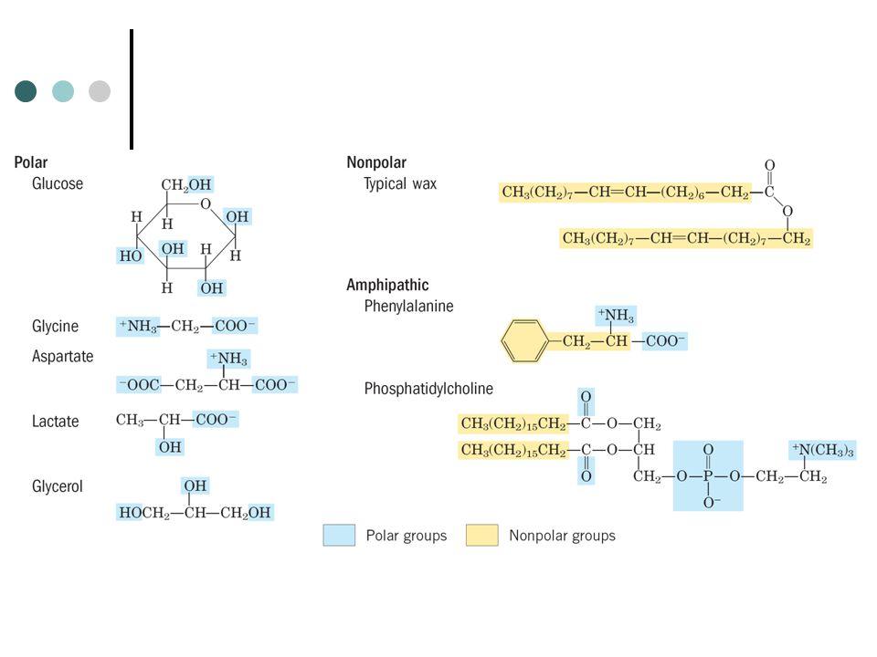 Interaksi dengan molekul amfifatik