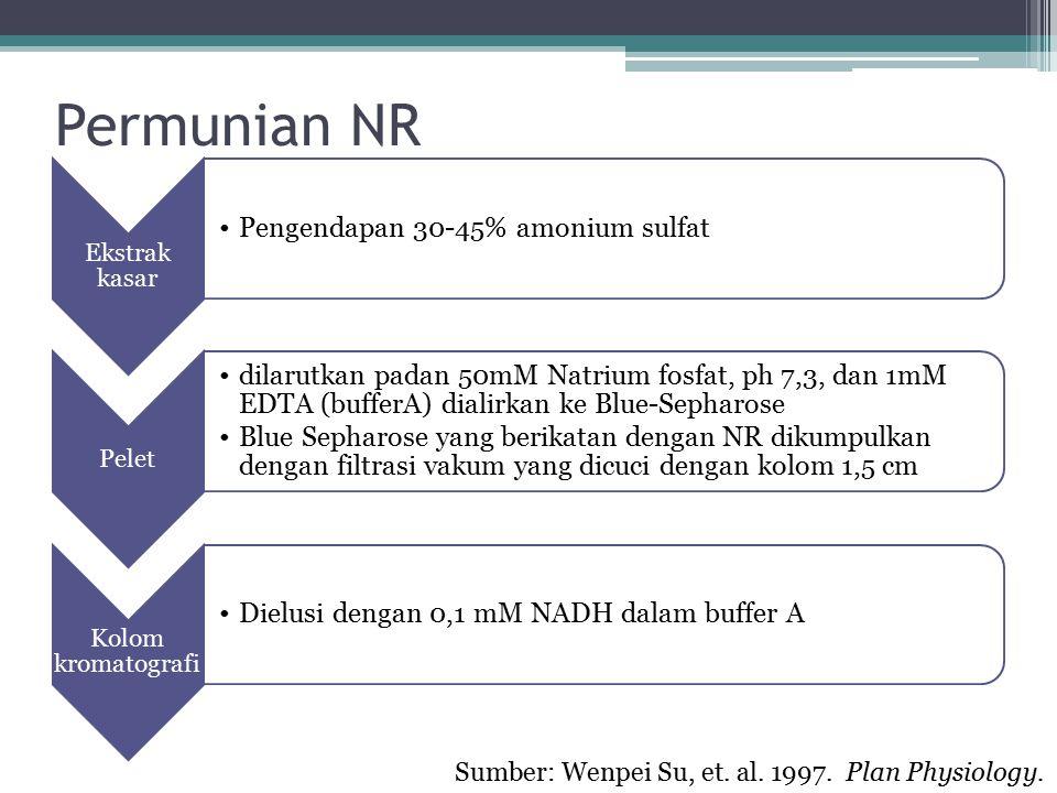 Permunian NR Ekstrak kasar Pengendapan 30-45% amonium sulfat Pelet dilarutkan padan 50mM Natrium fosfat, ph 7,3, dan 1mM EDTA (bufferA) dialirkan ke B