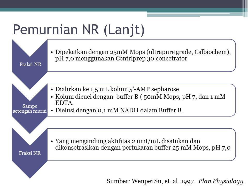Pemurnian NR (Lanjt) Fraksi NR Dipekatkan dengan 25mM Mops (ultrapure grade, Calbiochem), pH 7,0 menggunakan Centriprep 30 concetrator Sampe setengah