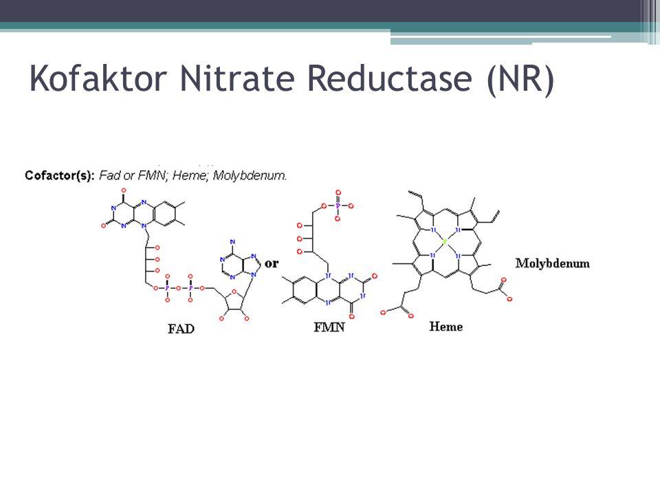Pengujian Kinetik NR Sampel NR murni Eksperimen dilakukan pada 25 o C dalam 1 mL buffer yang mengandung 50 mM Mops, pH 7,0 dengan pengukuran A340 dengan kuvet 1 cm dan UV /Vis Spektrofotometry Konsterasi Subtrat Divariasikan dari 0,5-20 μM untuk NADH dan 2,5-60 μM untuk KNO3 Analisis Kecepatan awal reaksi dianalisis dengan Enzpack software Spektrum dari oksidasi sampel dan NADH(red) ditentukan pada 25oC menggunakan UV/Vis dioda array spectofotometer Sumber: Wenpei Su, et.
