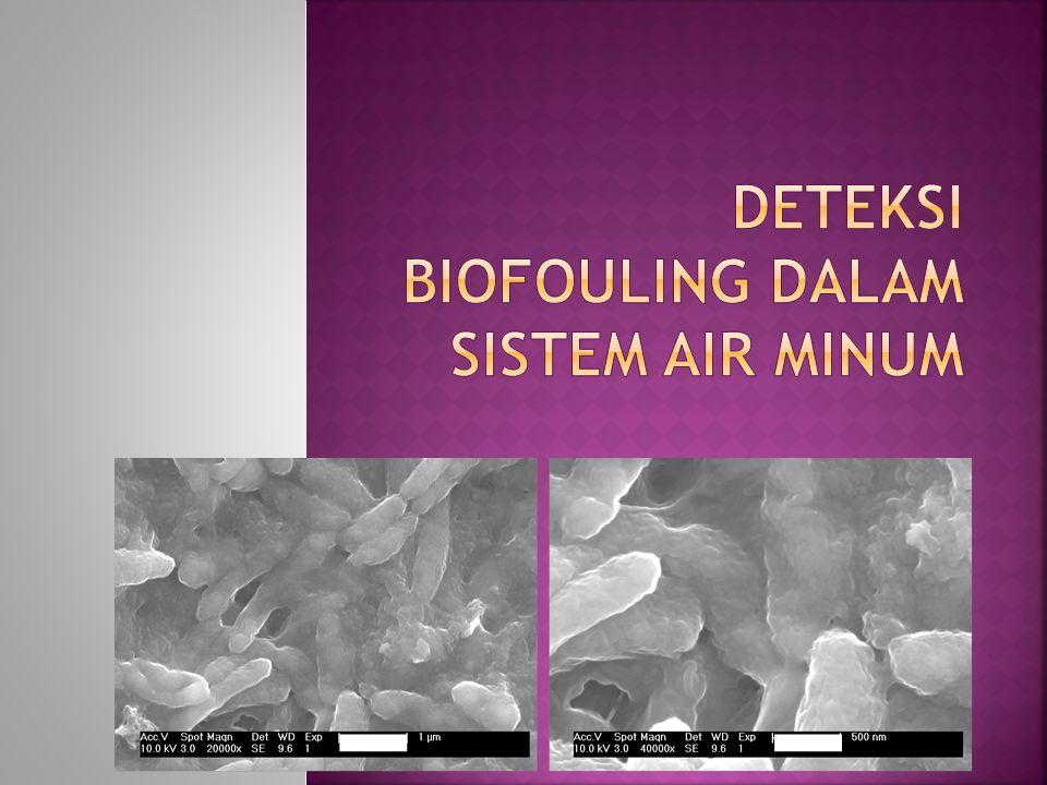 22 Biofilm Centre Where to monitor: Membranes.Periphery.
