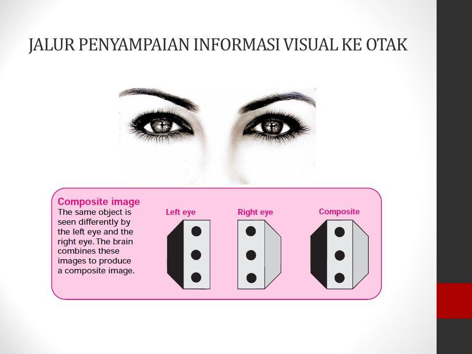 JALUR PENYAMPAIAN INFORMASI VISUAL KE OTAK Visual korteks Ganglion genikulatum lateral Jalur Optik Optik kiasma Saraf Optik Mata