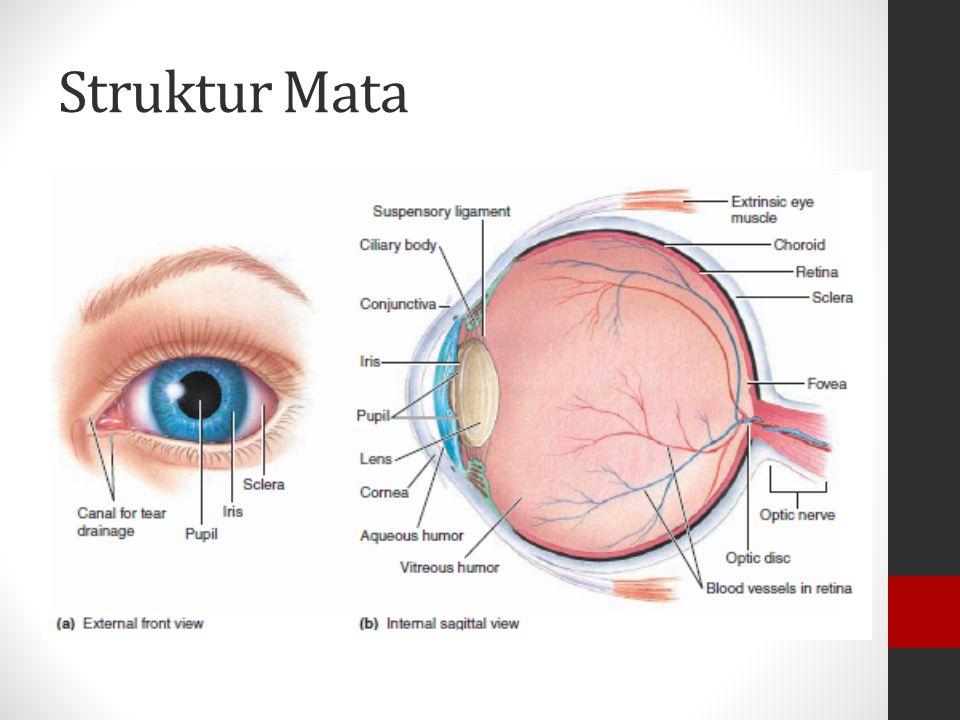 MATA Sel-sel saraf pada mata disebut photoreceptors, terdiri dari dua sel yaitu sel kerucut dan sel batang Sel-sel ini dirangsang oleh cahaya dan meng
