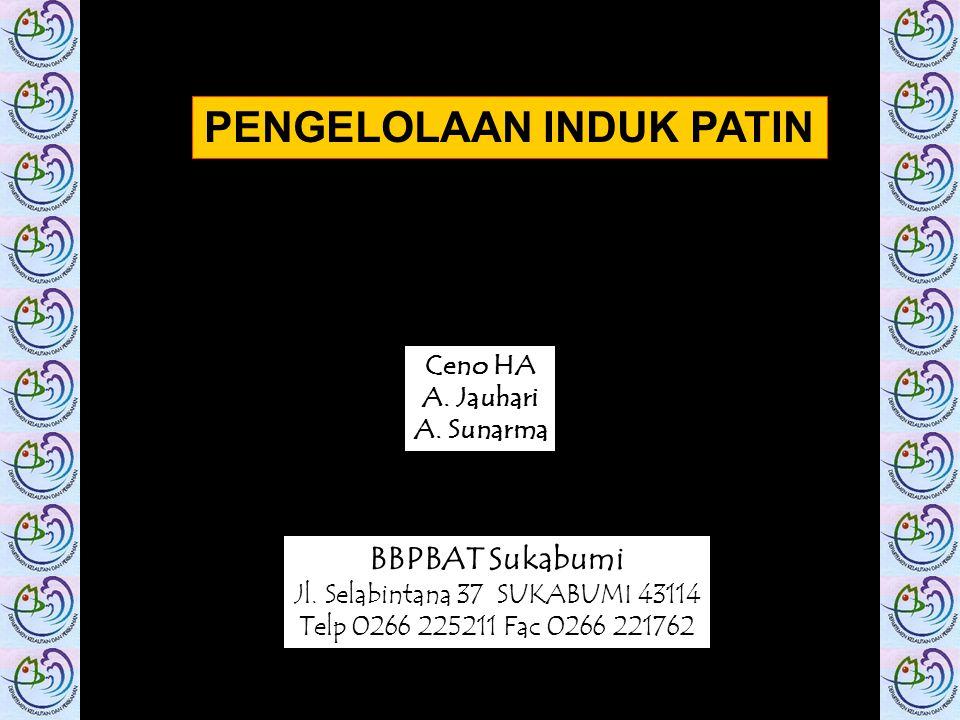 Ceno HA A. Jauhari A. Sunarma BBPBAT Sukabumi Jl. Selabintana 37 SUKABUMI 43114 Telp 0266 225211 Fac 0266 221762 PENGELOLAAN INDUK PATIN