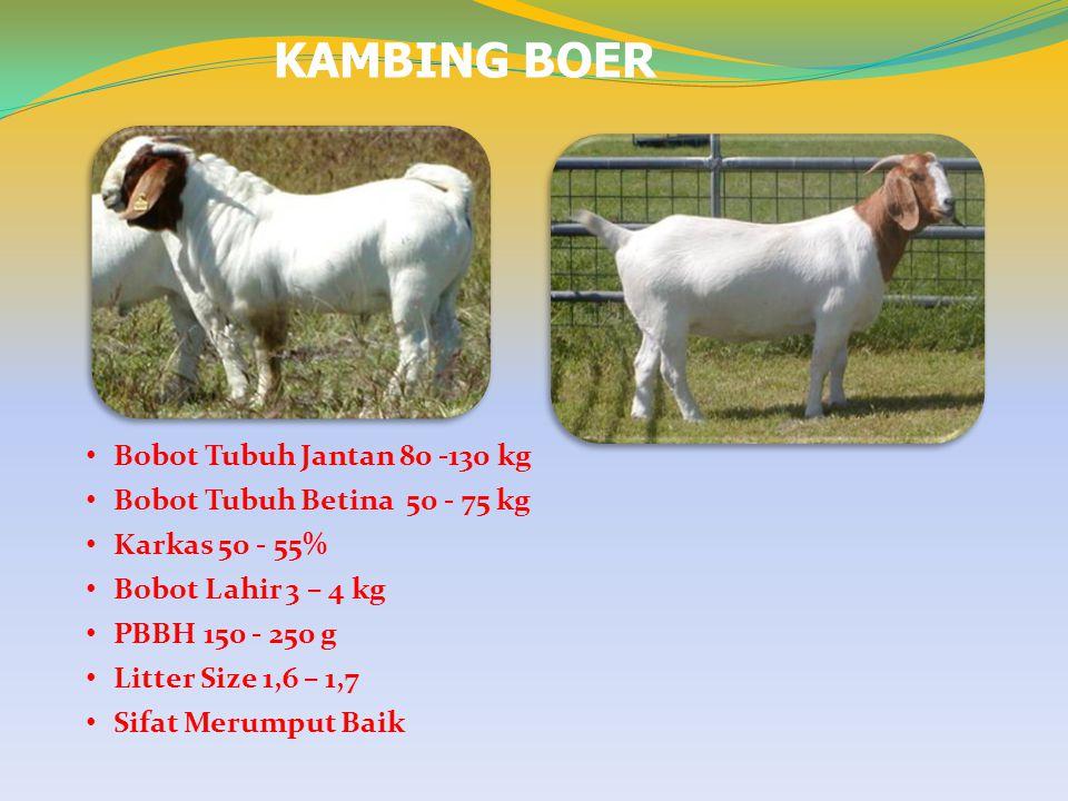 KAMBING BOER Bobot Tubuh Jantan 80 -130 kg Bobot Tubuh Betina 50 - 75 kg Karkas 50 - 55% Bobot Lahir 3 – 4 kg PBBH 150 - 250 g Litter Size 1,6 – 1,7 S