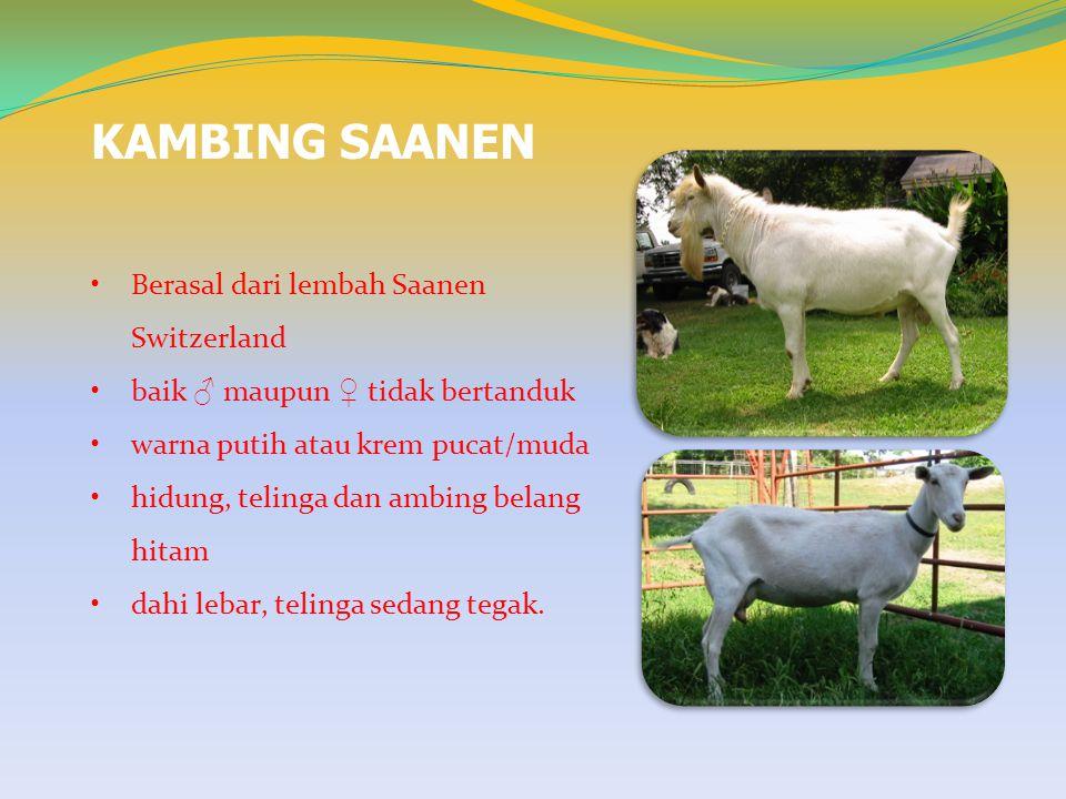 BAHAN PAKAN UNTUK TERNAK Zat makanan yg paling diperlukan oleh kambing/domba adalah protein dan energi.