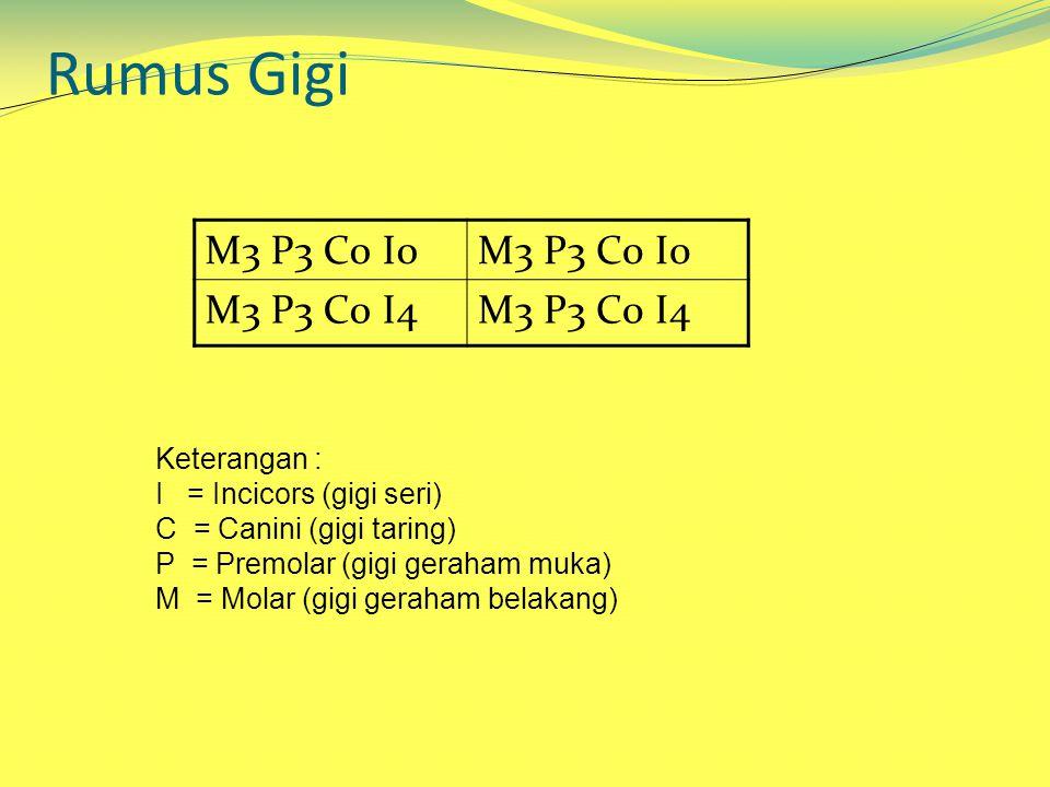 M3 P3 C0 I0 M3 P3 C0 I4 Rumus Gigi Keterangan : I = Incicors (gigi seri) C = Canini (gigi taring) P = Premolar (gigi geraham muka) M = Molar (gigi geraham belakang)