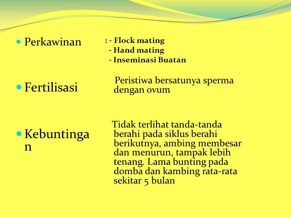 Perkawinan Fertilisasi Kebuntinga n : - Flock mating - Hand mating - Inseminasi Buatan Peristiwa bersatunya sperma dengan ovum Tidak terlihat tanda-ta