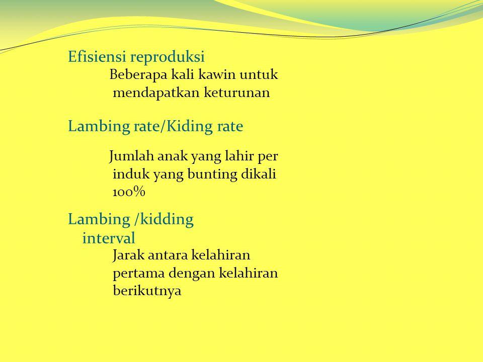 Efisiensi reproduksi Lambing rate/Kiding rate Lambing /kidding interval Beberapa kali kawin untuk mendapatkan keturunan Jumlah anak yang lahir per induk yang bunting dikali 100% Jarak antara kelahiran pertama dengan kelahiran berikutnya