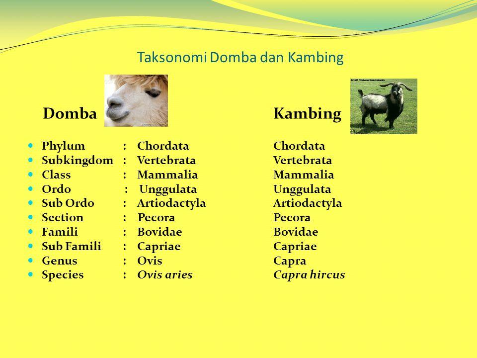 Taksonomi Domba dan Kambing Domba Phylum : Chordata Subkingdom: Vertebrata Class : Mammalia Ordo : Unggulata Sub Ordo : Artiodactyla Section : Pecora