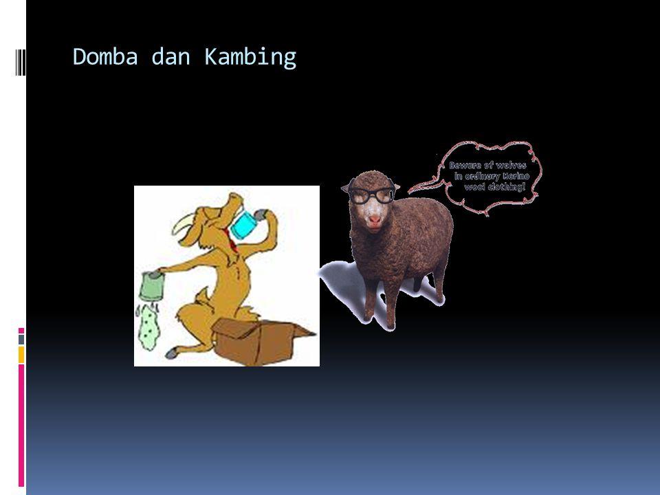 Berahi/Estrus Tanda-tanda berahi, gelisah, mencoba menaiki hewan lain, pangkal ekor terangkatsedikit, vulva kemerahan dan sedikit keluar lendir.