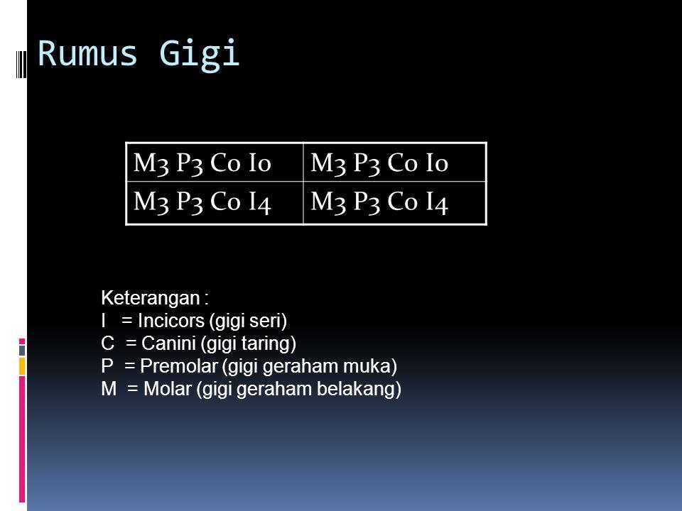 Rumus Gigi M3 P3 C0 I0 M3 P3 C0 I4 Keterangan : I = Incicors (gigi seri) C = Canini (gigi taring) P = Premolar (gigi geraham muka) M = Molar (gigi geraham belakang)