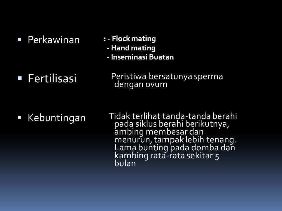  Perkawinan  Fertilisasi  Kebuntingan : - Flock mating - Hand mating - Inseminasi Buatan Peristiwa bersatunya sperma dengan ovum Tidak terlihat tanda-tanda berahi pada siklus berahi berikutnya, ambing membesar dan menurun, tampak lebih tenang.