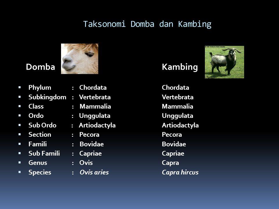 Taksonomi Domba dan Kambing Domba  Phylum : Chordata  Subkingdom: Vertebrata  Class : Mammalia  Ordo : Unggulata  Sub Ordo : Artiodactyla  Section : Pecora  Famili : Bovidae  Sub Famili : Capriae  Genus : Ovis  Species : Ovis aries Kambing Chordata Vertebrata Mammalia Unggulata Artiodactyla Pecora Bovidae Capriae Capra Capra hircus
