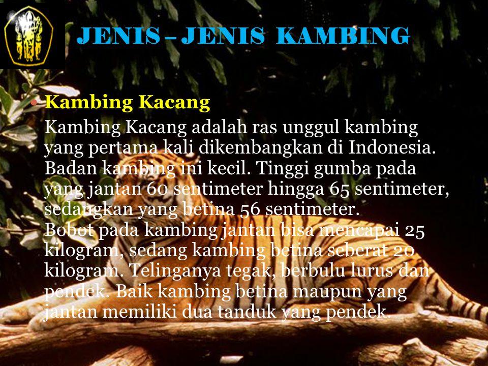 JENIS – JENIS KAMBING Kambing Kacang Kambing Kacang adalah ras unggul kambing yang pertama kali dikembangkan di Indonesia.