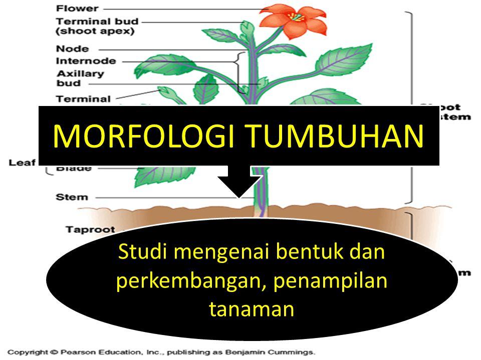 MORFOLOGI TUMBUHAN Studi mengenai bentuk dan perkembangan, penampilan tanaman